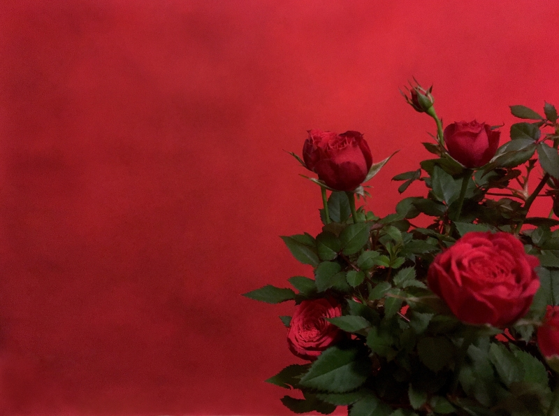 Ros mot röd bakgrund